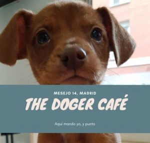 Unusual cafes in Madrid - The Doger