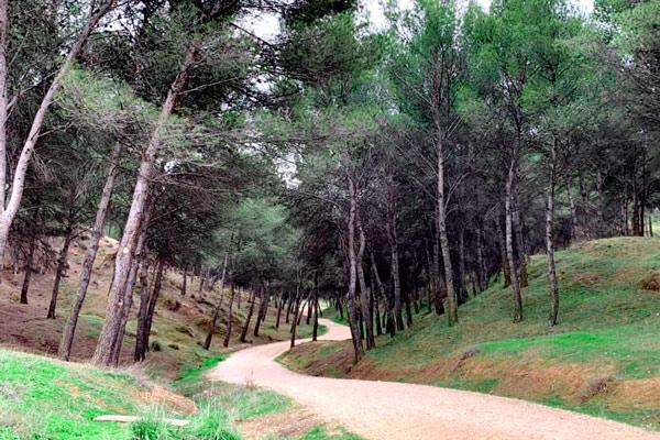 Hiking with kids in Los Cerros de Alcala